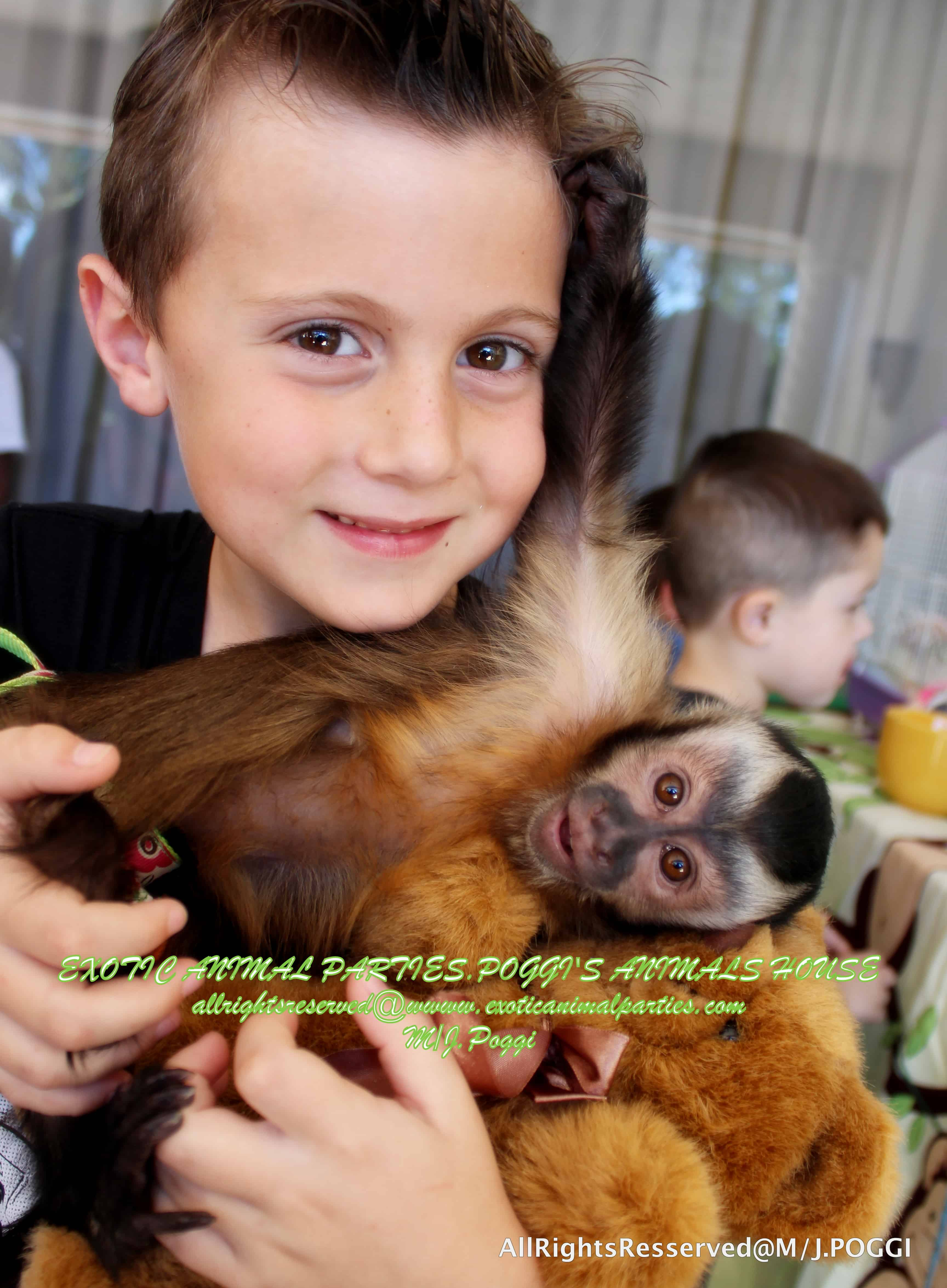 Services - Birthday Capuchin Monkey Party